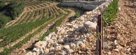 Jordan Samar Vyd