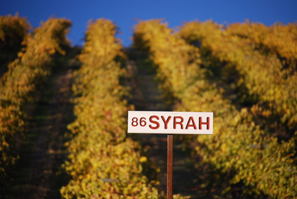 Red Willow Vineyard Syrah