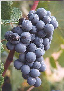 The Bobal Grape