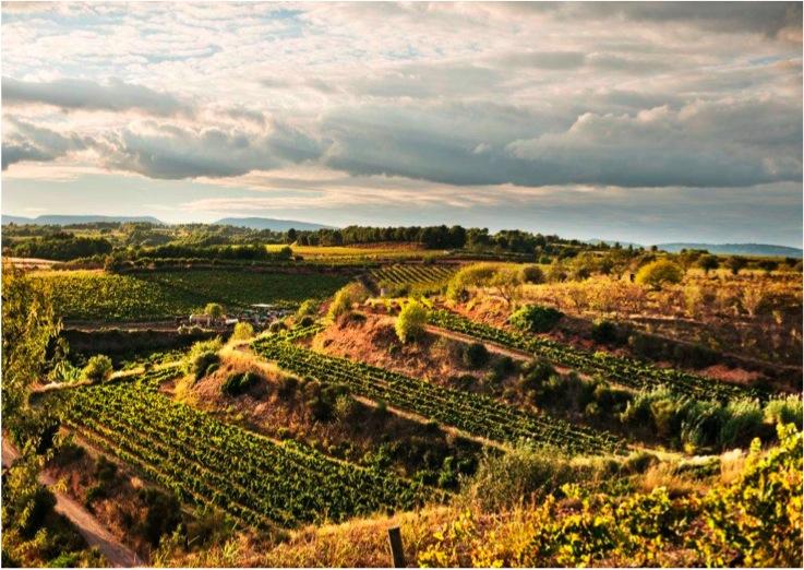 Gramona's Cava Vineyards in Penedès