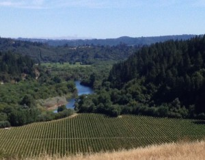 The Russian River as Seen From the Top of the MacMurray Ranch Vineyard