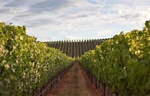 Gap's Crown Vineyard