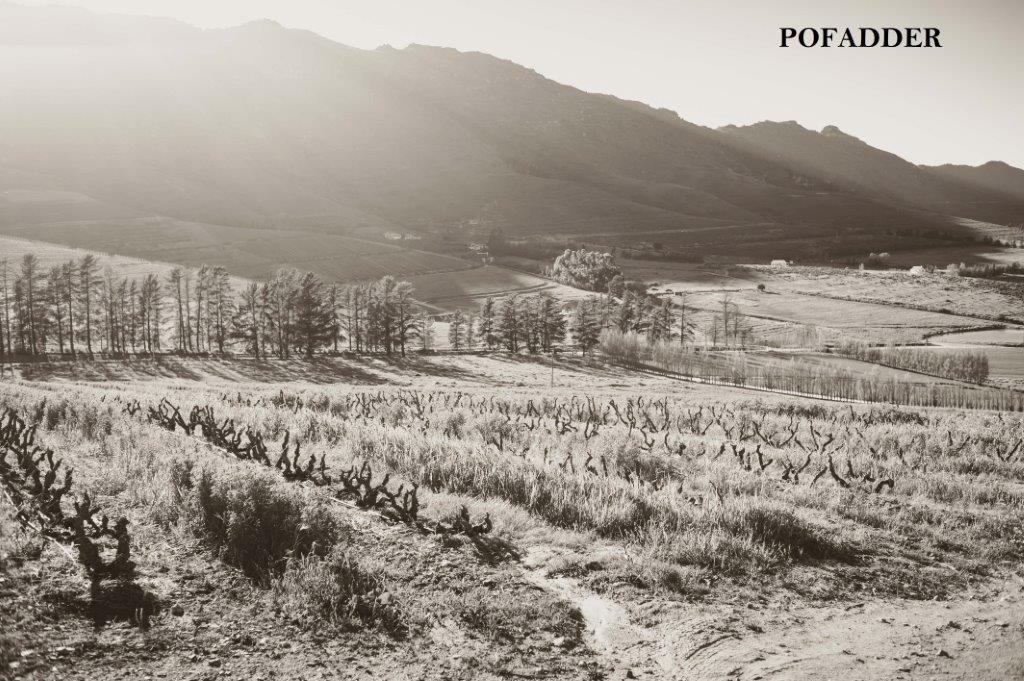 Pofadder Vineyard