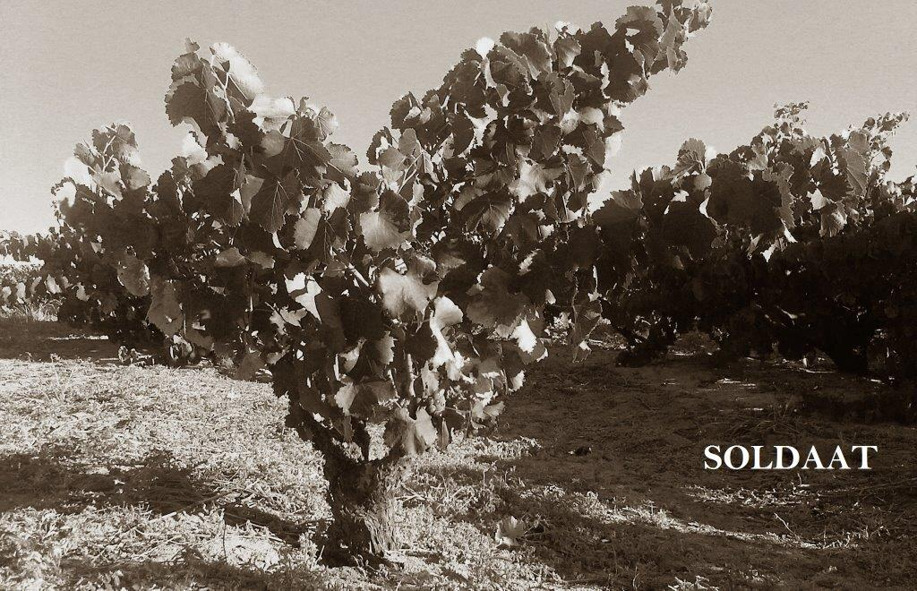 Old Vine Grenache at Soldaat