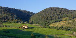 ART I Veroni_panorama