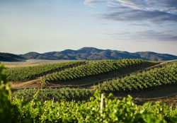 Chile's Premium Wine Revolution