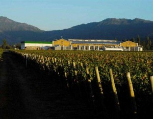 The Apaltagua Winery in Palmilla, Colchagua