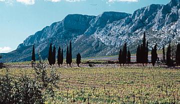 ROSE Provence Sainte Victoire