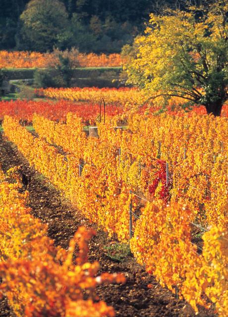 ROSE Provence Vyd 1