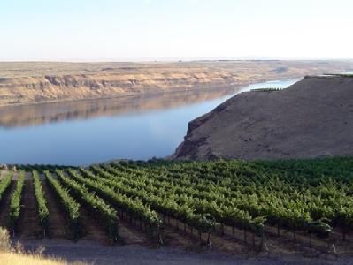 The Wallula Vineyard