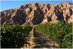 Santa Barbara Highlands Vineyard