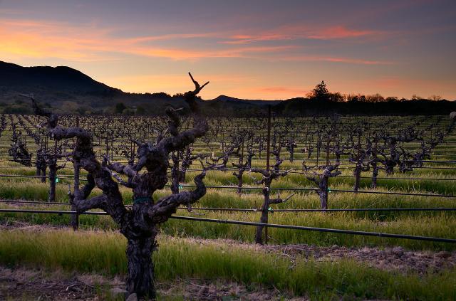 Bedrock Vineyard