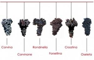 ART Negrar Grapes