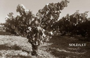 Old Vine Grenache at Soldaat