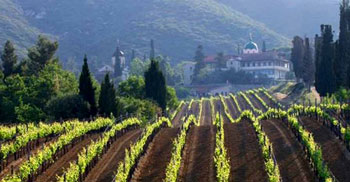 The Wines of Bulgaria