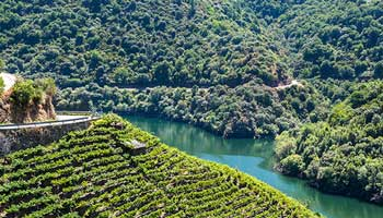 The Wines of Galicia